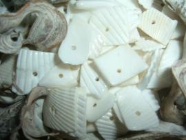 Schelpen chips kokkel wit
