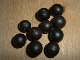 Mooie zwarte Chambimbe zaden