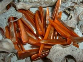 Langwerpige schelpen in mooie bruinoranje tinten