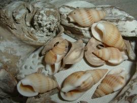 Mooie schelpkralen wulken beige