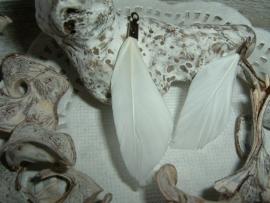 Mooie witte veertjes van 4 cm.