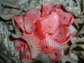 Schelpen chips kokkel in een mooie fuchsia roze kleur