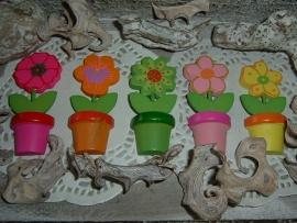 Leuke vrolijke gekleurde bloemetjes in potje
