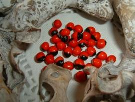 Mooie kleine rood met zwarte Huairuro zaden kralen