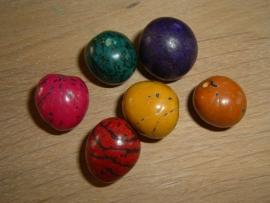 Mooie grote gekleurde Pambil zaden