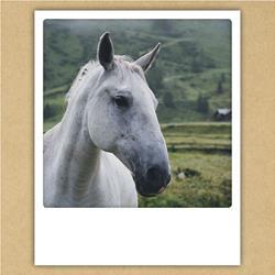 Paardenkaart