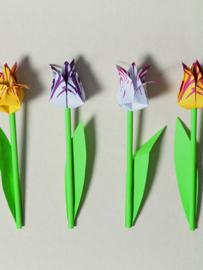 Vouw Tulpen - Piet Design
