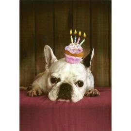 Bulldog verjaardagskaart