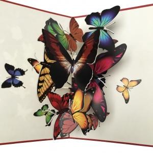 Vlinder wolk kaart