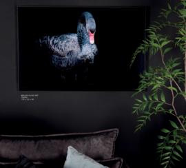 Melani Glass Art wall picture black swan