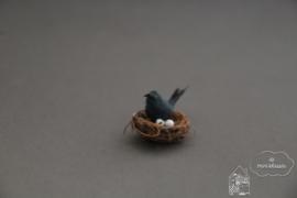 Merel met nest