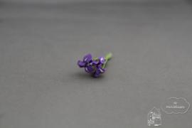 Iris paars