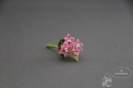 Lelie roze