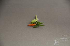 Oranje plant