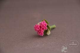 Geranium licht roze