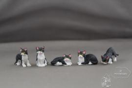 Kleine kat zwart/wit