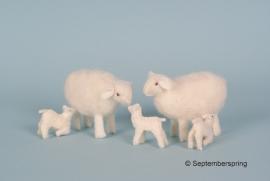 Patroonblad schapen en lammetjes