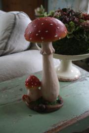 mooie grote paddenstoel