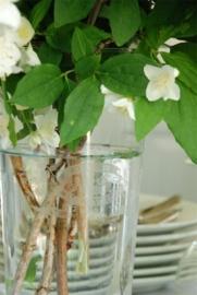 prachtige handgeblazen vaas met mooie decoratie