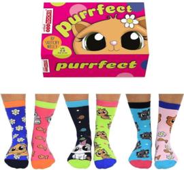 Oddsocks - Cadeaudoos Purrfect met 6 verschillende katachtige sokken - maat 37-42