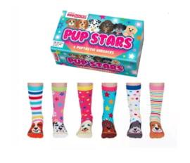 Oddsocks - Mismatched sokken - Cadeaudoos met 6 honden sokken - Pup Stars - maat 30,5 tot 38
