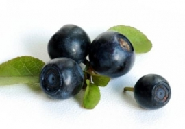 Fragrance oil for cosmetics / melt & pour soap - Blueberries - GOG023