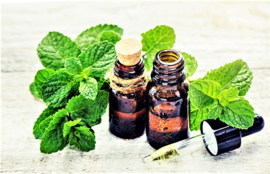 Essential oil Mint (Field mint) - EO026