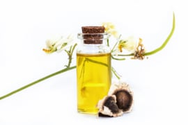 - NEW - Moringa Seed Oil - cold pressed - OBW072