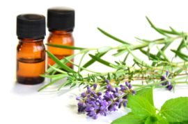 Essential oil Thyme (white) (nature identical) - EO040