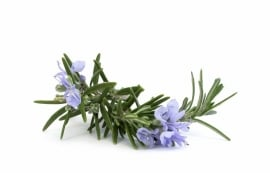 Essential oil Rosemary - EO018