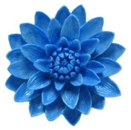 - AANBIEDING - First Impressions - Bloemen - klassieke chrysant - FL271