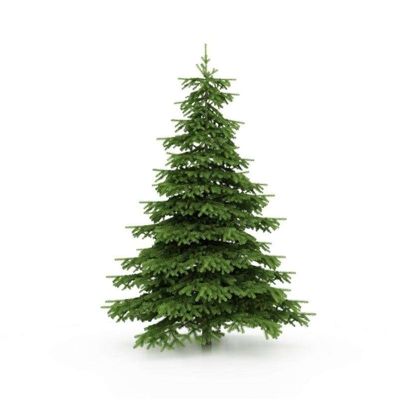 Geurolie voor cosmetica / zeep / melts - Kerstboom / Dennenboom - GOS404