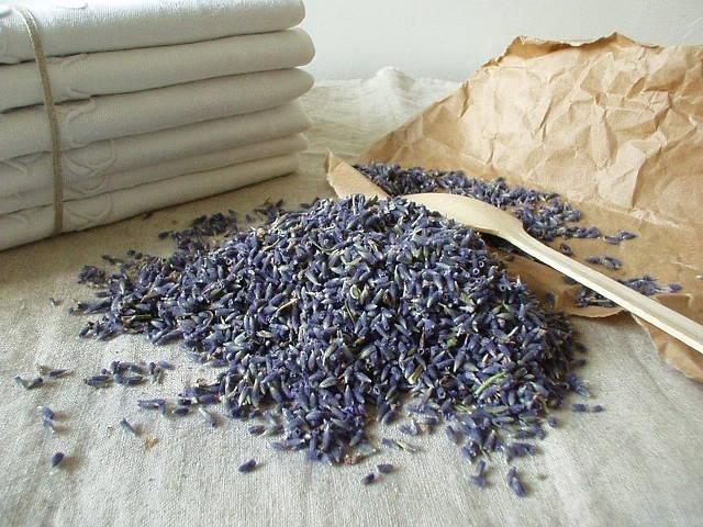 Lavendel bloem - BEK008