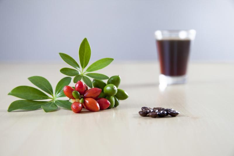Groene Koffie olie - koud geperst - OBW063