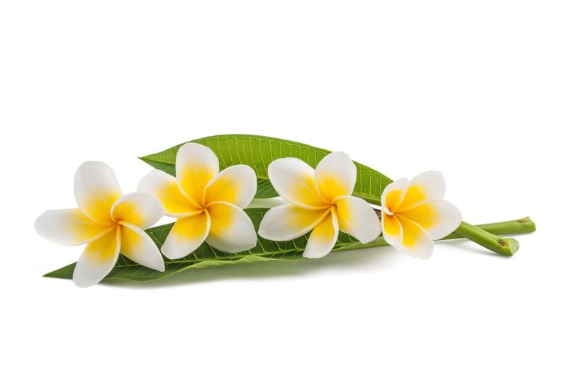 Parfum voor kaarsen - Gardenia Monoi - PKB507
