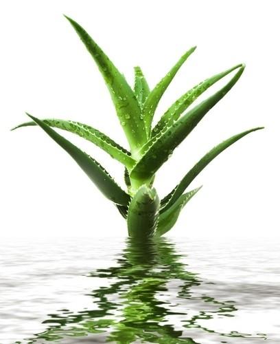 Aloë Vera extract / Soja olie (biologisch) - OBW026