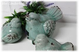 Vogel turquoise S