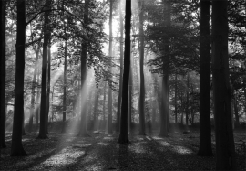 Papermoon Fotobehang Forest in the Morning 97006