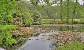 Noordwand Holland Fotobehang Hoge Veluwe vijver 7575