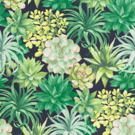 Casadeco Botanica behang Echeveria BOTA 85917396