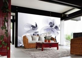 AG Design Fotobehang Orchideeën  FTS1306