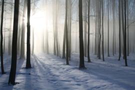 Papermoon Fotobehang Vlies Mistig bos in de winter 18340