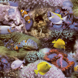 Noordwand Good Vibes behang Tropische Vissen GV24270