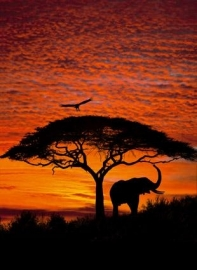 Komar African Sunset Fotobehang National Geographic 4-501