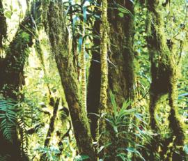 Eijffinger Wallpower Junior 364156 In The Jungle
