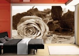 AG Design Fotobehang Roos Zwart Wit FTS0086