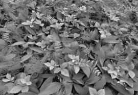 Komar Fotobehang Forest Floor 8-914