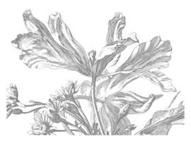 KEK Amsterdam Wonderwalls behang Engraved Flowers III WP-337