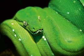 XXL Wallpaper Green Snake 0310-4