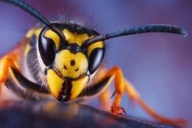 XXL Wallpaper Wasp 0310-0
